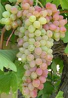 Виноград Мечта кишмиш (саженцы)