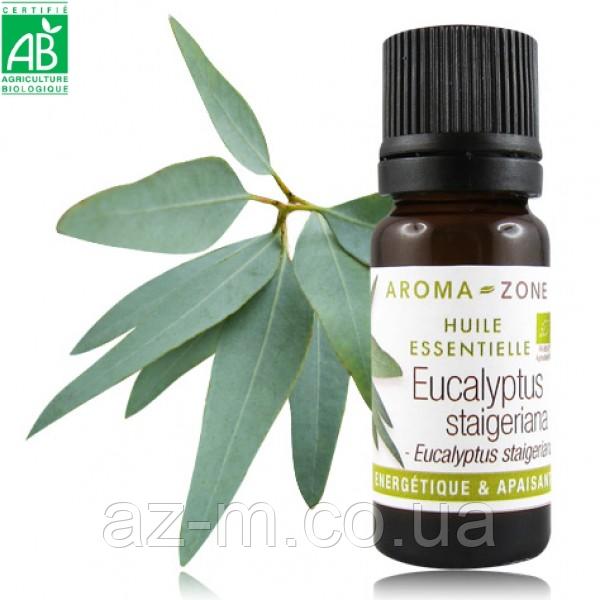 Эвкалипт Staigeriana (Eucalyptus staigeriana) BIO эфирное масло, 10 мл