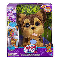 Интерактивный игривый щенок Джейк FurReal Friends Playful Pets Jake, My Jumpin' Yorkie