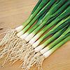 КАРЕЛ - семена лука на перо, 50 000 семян, Hazera