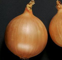 ДОРМО F1 - семена лука репчатого, 250 000 семян, Hazera, фото 1