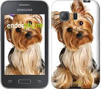 """Чехол на Samsung Galaxy Young 2 G130h Йоркширский терьер с хвостиком """"930u-206"""""""