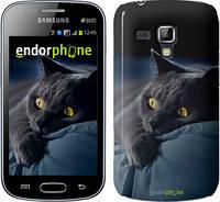 """Чехол на Samsung Galaxy S Duos s7562 Дымчатый кот """"825c-84"""""""