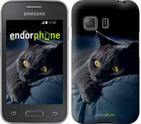 """Чехол на Samsung Galaxy Young 2 G130h Дымчатый кот """"825u-206"""""""