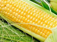 Семена кукурузы Моника МВ 350