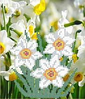 Схема для вышивки бисером Нарцисс