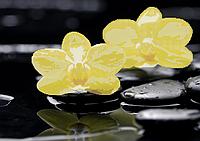 Схема для вышивки бисером Желтые орхидеи на камнях