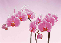 Схема для вышивки бисером Орхидея на розовом фоне