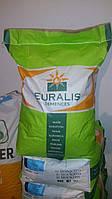 Семена кукурузы (Euralis) ЕС Кубус 2015г. Украина