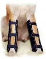 Ортопедические операции, консультиция для животных