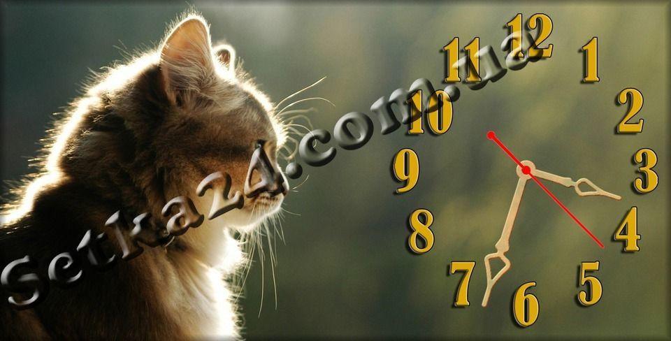 """Часы настенные """"Кошка"""" (30х60 см)"""