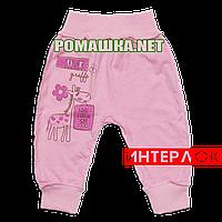 Штанишки на широкой резинке р. 62 демисезонные  ткань ИНТЕРЛОК 100% хлопок ТМ Алекс 3297 Розовый