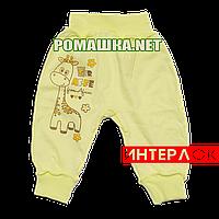 Штанишки на широкой резинке р. 80-86 демисезонные ткань ИНТЕРЛОК 100% хлопок ТМ Алекс 3297 Желтый