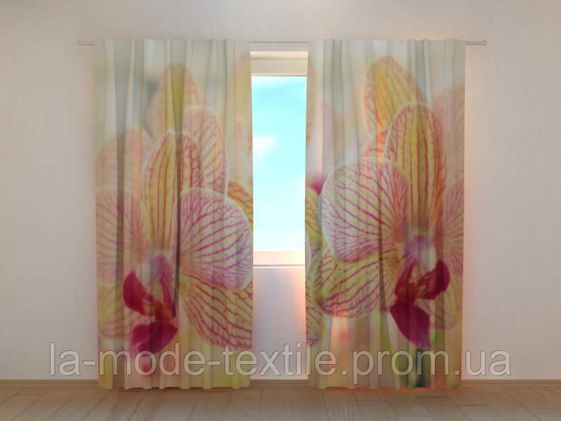 Фото шторы 3D Две орхидеи