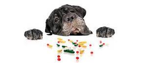 Вітаміни для тварин
