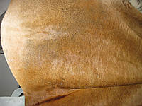 Шкура коровья натуральная, фото 1