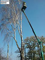 Аварийный спил деревьев (066)4327255, удаление деревьев Киев