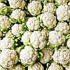 Семена капусты кольраби Снежана 0,5 г. Nasko