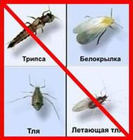 Инсектициды от тли, листовертки, гусениц и др. вредителей