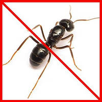 Кошти від мурах і ос
