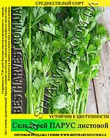 Семена сельдерея Парус, листовой 0,5кг