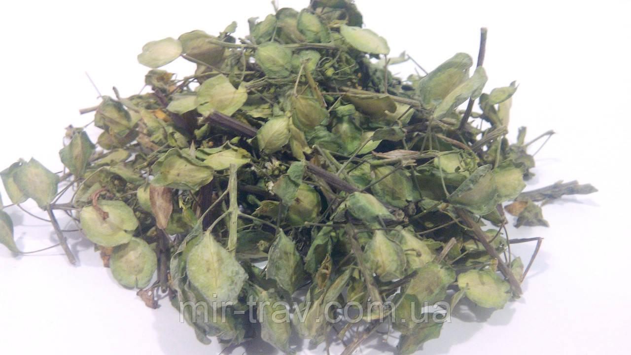 Ярутка полевая трава оптом