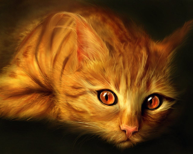 Товары для кошек, котов и котят
