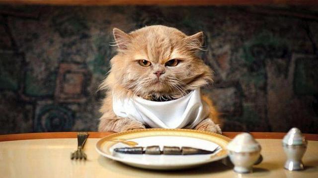 Сухой корм для кошек, котов и котят.