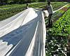 Белое агроволокно 30 г/м2,  4.2х100 м, фото 5