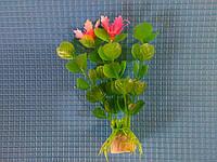 """Растение 10см, серии """"Е"""" № 23"""