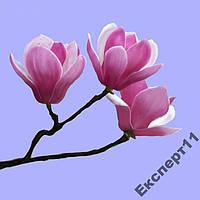 20 семян розовой магнолии / семена  магнолия 20 шт