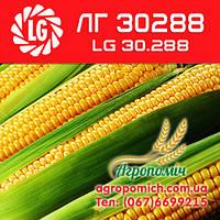 Кукуруза ЛГ 30288 (LG 30.288)