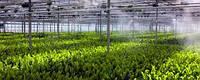 Системы туманообразования для теплиц и зимних садов