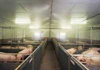 Туманообразование в свиноводстве
