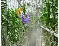 Туманообразующие системы для различных сфер применения в сельском хозяйстве.