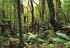 "Фотообои ""Дремучий лес"" 368х254 см"