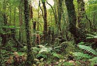 "Фотообои ""Дремучий лес"" 368х254 см  , фото 1"