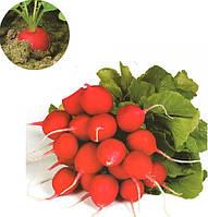 Семена редиса Арли F1 25 000 сем. калибр. < 2.75 Рийк цваан.