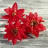 Головка рождественника (диаметр цветка 6,5 см)