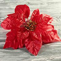 Головка рождественника (диаметр цветка 22 см)