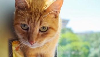 Корм для кошек с курицей и рисом Brit Care Cat Lucky Adult