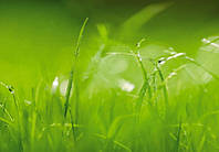 "Фотообои на стену ""Зеленая трава"" 368х254 см  , фото 1"
