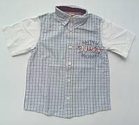 Рубашка для мальчика с коротким рукавом IANA