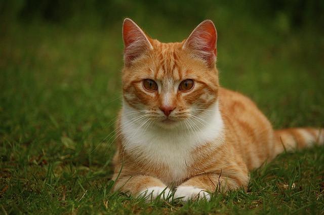 Корм для кошек с чувствительным пищеварением Trainer Personal Sensintestinal