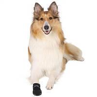 Как выбрать обувь собаке