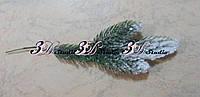 Ветка сосновая тройка в снегу