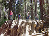 МАМОНТОВО ДЕРЕВО или СЕКВОЙЯДЕНДРОН ГИГАНТСКИЙ (Sequoiadendron giganteum), фото 4