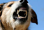 Электрошокер является результативным средством при защите от собак