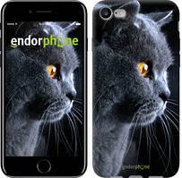 """Чехол на iPhone 7 Красивый кот """"3038c-336"""""""