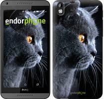 """Чехол на HTC Desire 816 Красивый кот """"3038u-169"""""""